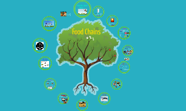 Grade 5: Food Chains
