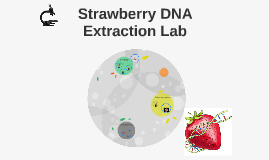 Strawberry DNA Extraction Lab by mother nola on Prezi