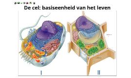 cellen en de organellen