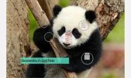 Copy of Characteristics of a Gaint Panda