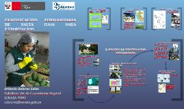 Certificación fitosanitaria de palta hass