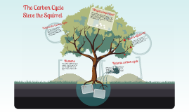 Steve Squirrel Carbon Cycle