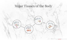 Major Tissues of the Body