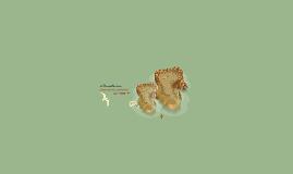 Mapa conceptual, Administración