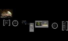Die Welt ohne Licht - Ökosystem Höhle