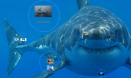 Nik's Shark Prezi