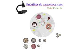 Endófitos de cacao