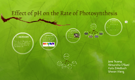 Effects of pH on the Rate of Photosynthesis