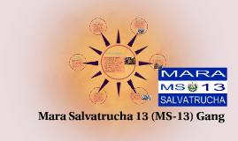 Mara Salvatrucha 13 (MS-13) Gang