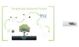 Copy of Temperate Seasonal Forest