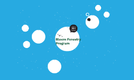 Bloom Forestry