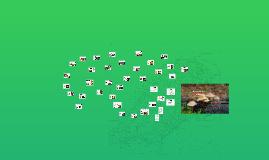 Copy of Diversidad fúngica de Aribe