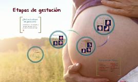 Copy of Etapas de gestación