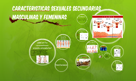 CARACTERISTICAS SEXUALES SECUNDARIAS MASCULINAS Y FEMENINAS