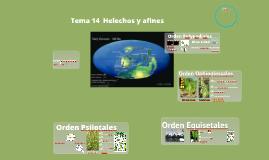 T17BV2018. Plantas vasculares sin semilla para Biotecnología