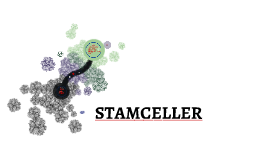 STAMCELLE
