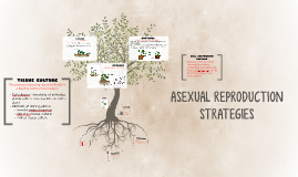Copy of ASEXUAL REPRODUCTION STRATEGIES