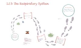 Respiratory System GCSE PE