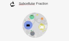 Subcellular Fraction