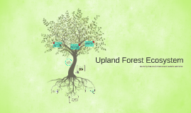 Upland Forest Ecosystem