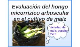 Evaluación del hongo micorrizico arbuscular en el cultivo de