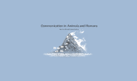 Communication in Animals and Humans