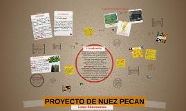 PROYECTO DE NUEZ PECAN