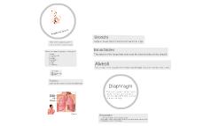 Copy of Respiratory System