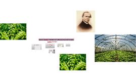 Copy of Leyes de Mendel. Principios de los Mecanismos de la Herencia