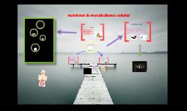 Copy of Copy of nutricion & metabolismo celular