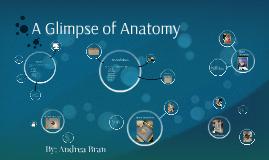 A Glimpse of Anatomy