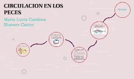 CIRCULACION EN LOS PECES