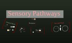 Copy of Sensory Pathways