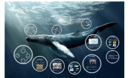 Imaginaire de la Baleine