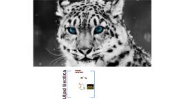 Biologjia Kafshet