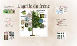 L'agrile du frêne