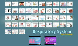 Anatomy & Physiology: Respiratory System