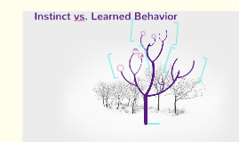 Copy of Instinct vs. Learned Behavior