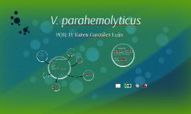 V. parahemolyticus