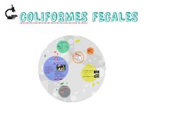 Copy of COLIFORMES FECALES