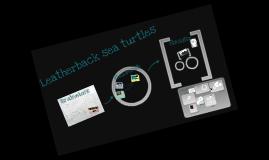leatherback sea turtles!