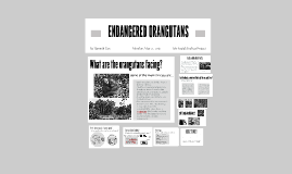The SS News- Orangutan Article