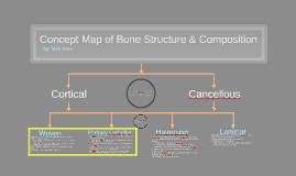 Concept Map of Bone Structure & Composition