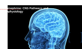 Norepinephrine: CNS Pathways and Neurophysiology