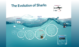 shark evolution essay Shark evolution essay the oldest shark scales go back to about 455 million years ago but since they are quite different from those in modern sharks, most paleontologists agree that they are not from sharks.