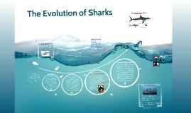 Copy of Evolution of Sharks