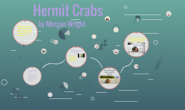 Hermit Crabs By Morgan Wright