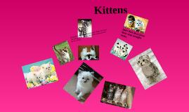 kittens  xxx