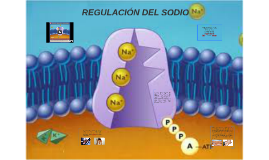 REGULACIÓN DEL SODIO