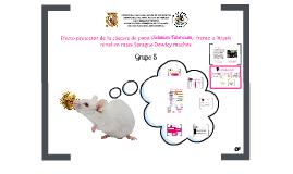 Patología Experimental- Protocolo